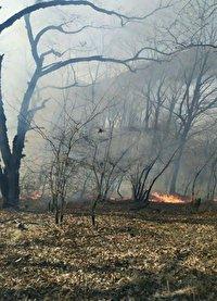 خسارت آتش سوزی به ۵ هکتار از وسعت پارک ملی گلستان