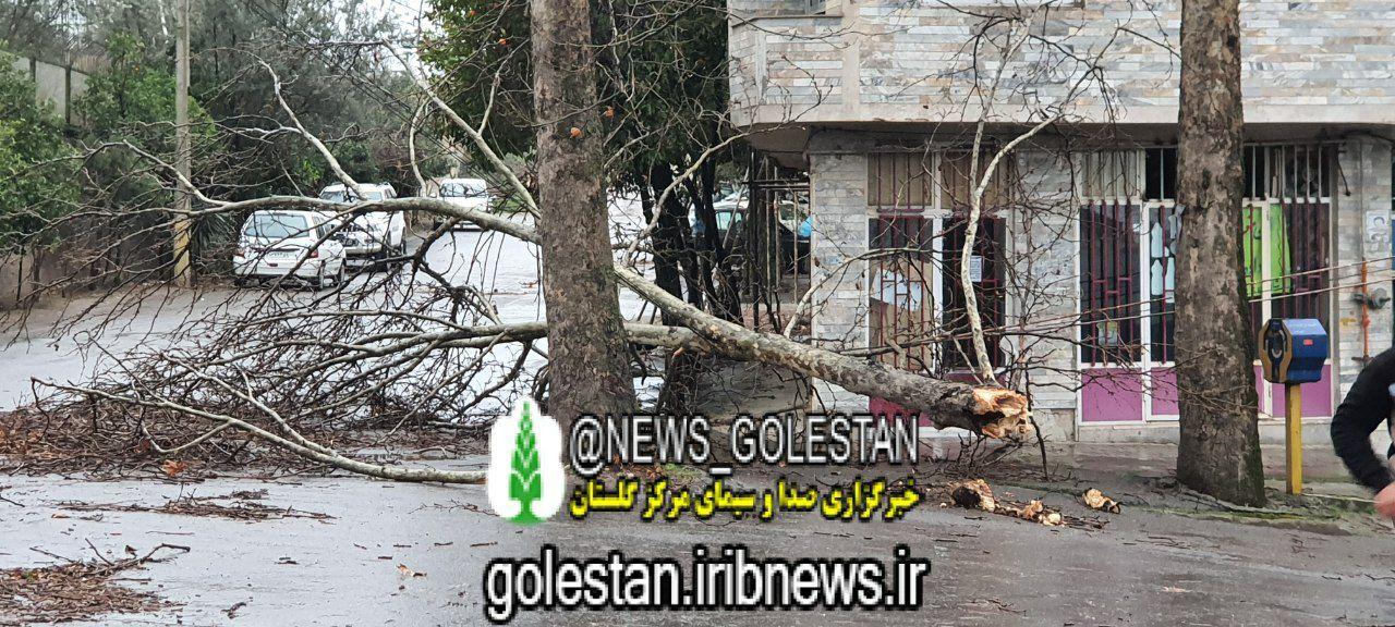 تصاویر قطع درختان و آسیب به واحدهای مسکوتی و بخش های کشاورزی