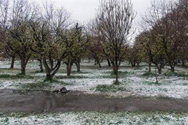 توصیههای مهم باغبانی با توجه به سرمای پیش رو